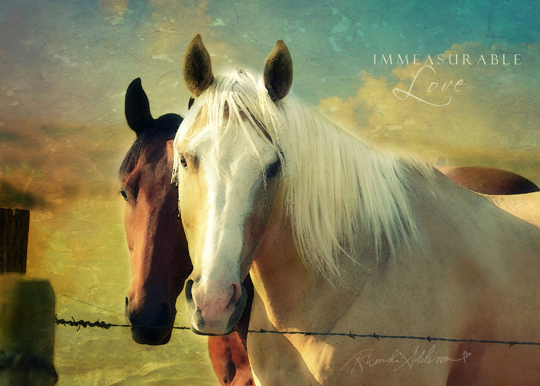 Horses 2 v s pyokya