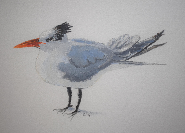 Royal tern osg8d8