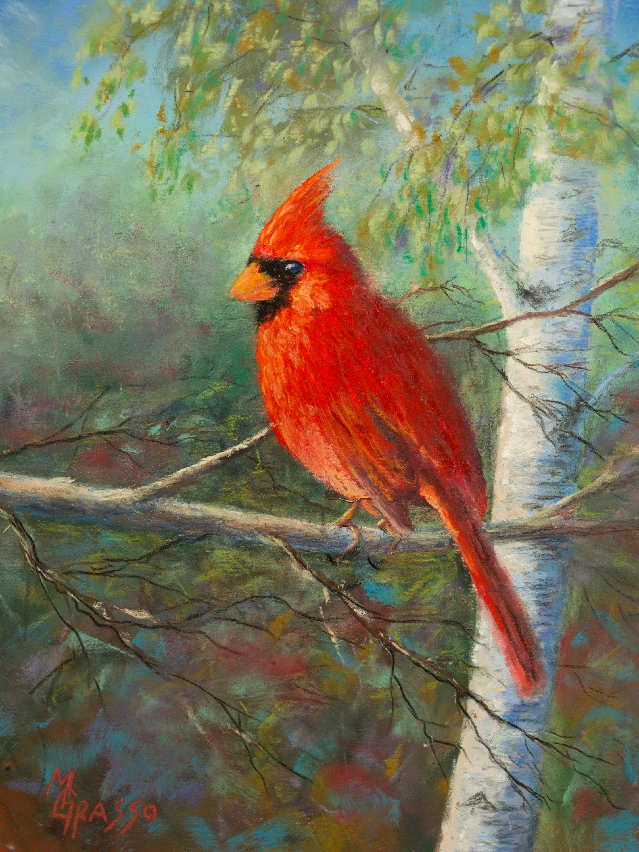 Evening cardinal sm ayazup
