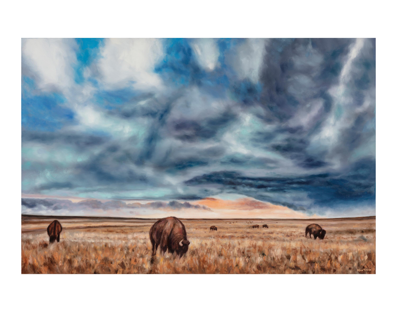 Bison grazing 11x14 vdnm5k