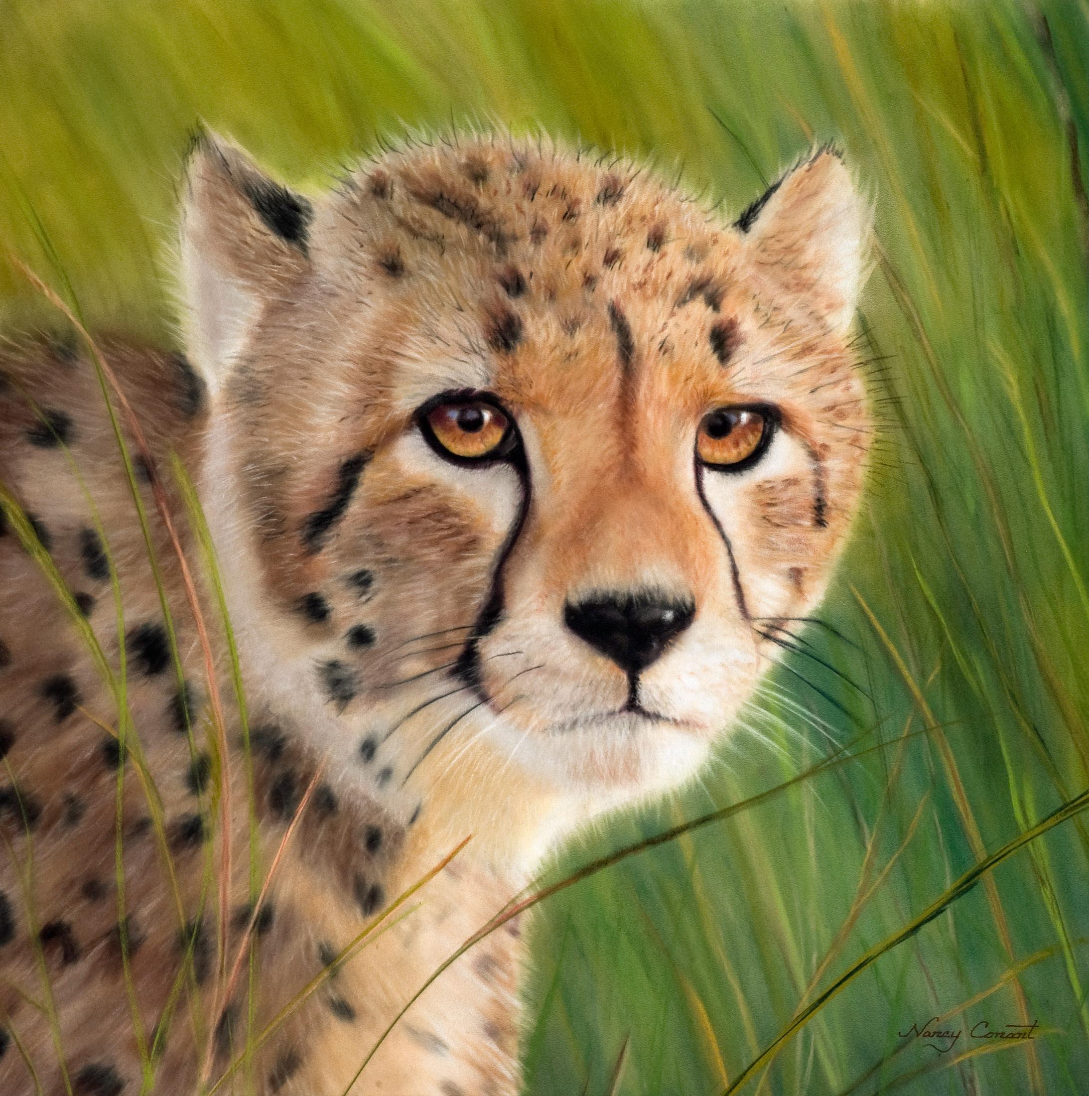 Cheetah beasley hr o75te2