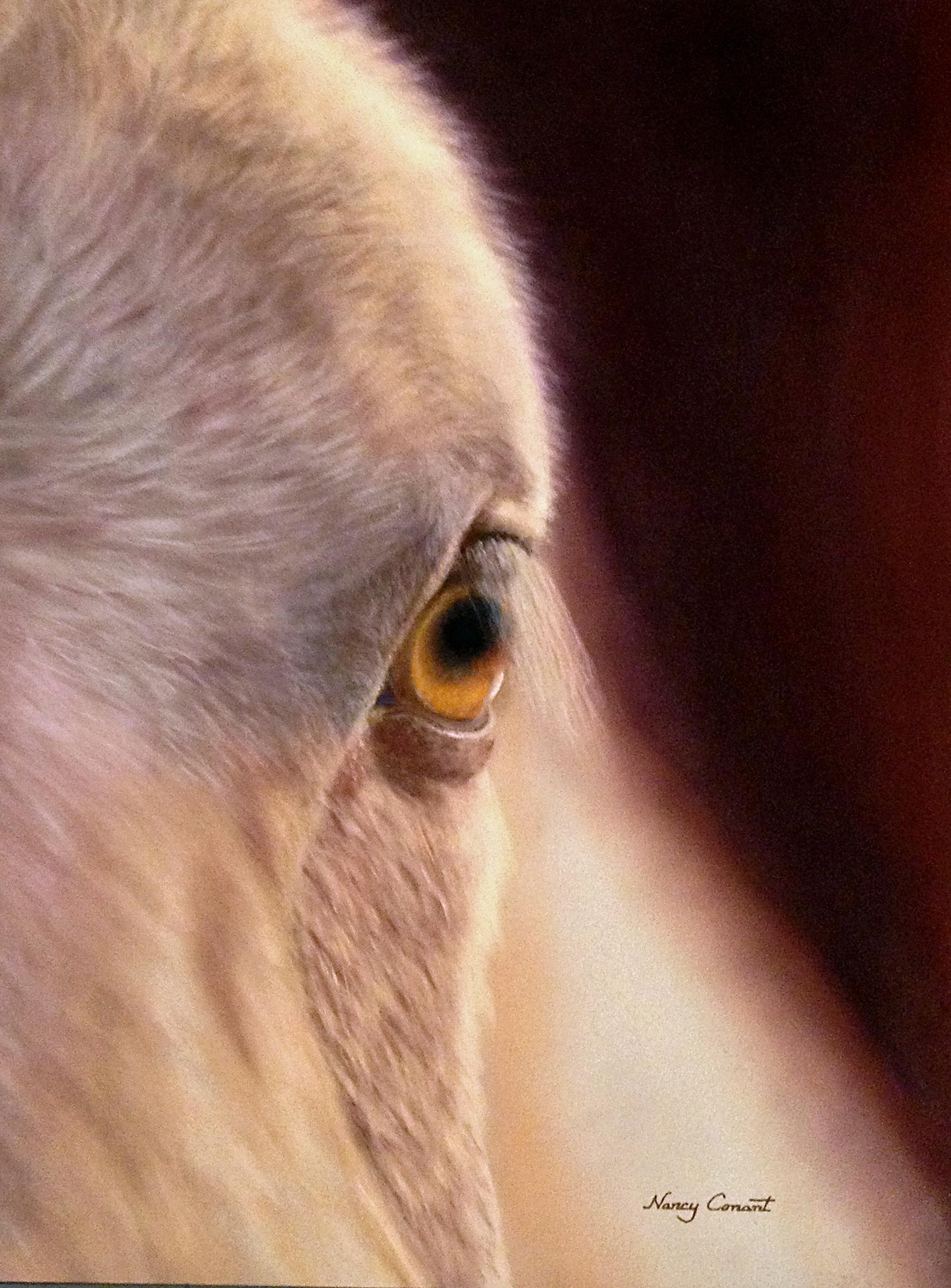 Horse eye vgwwlc