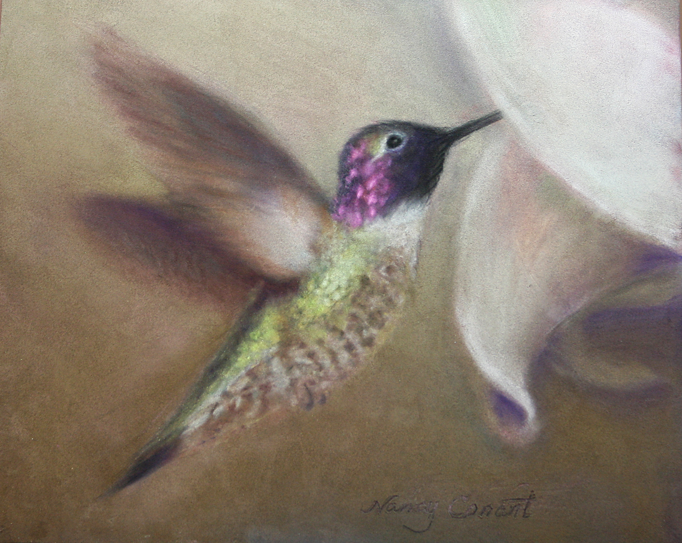 Hummingbird dont fly away abojwb