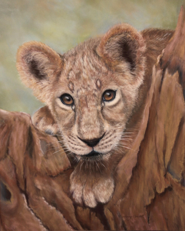 The lion cub krtz31