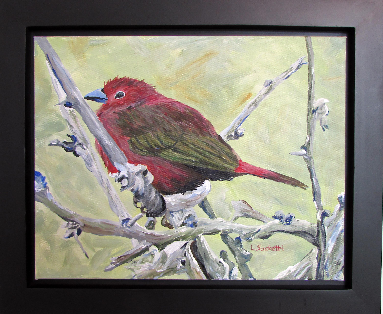 Firefinch framed zkr3wa