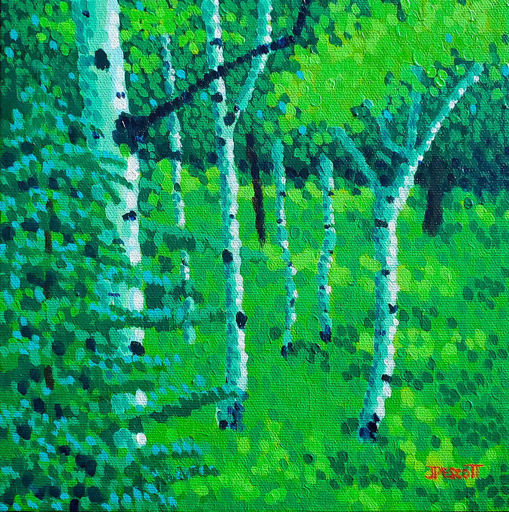 Trees along the path rhe5uc