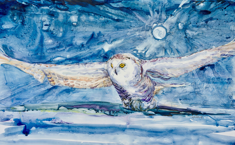 Snowy owl jsxjby