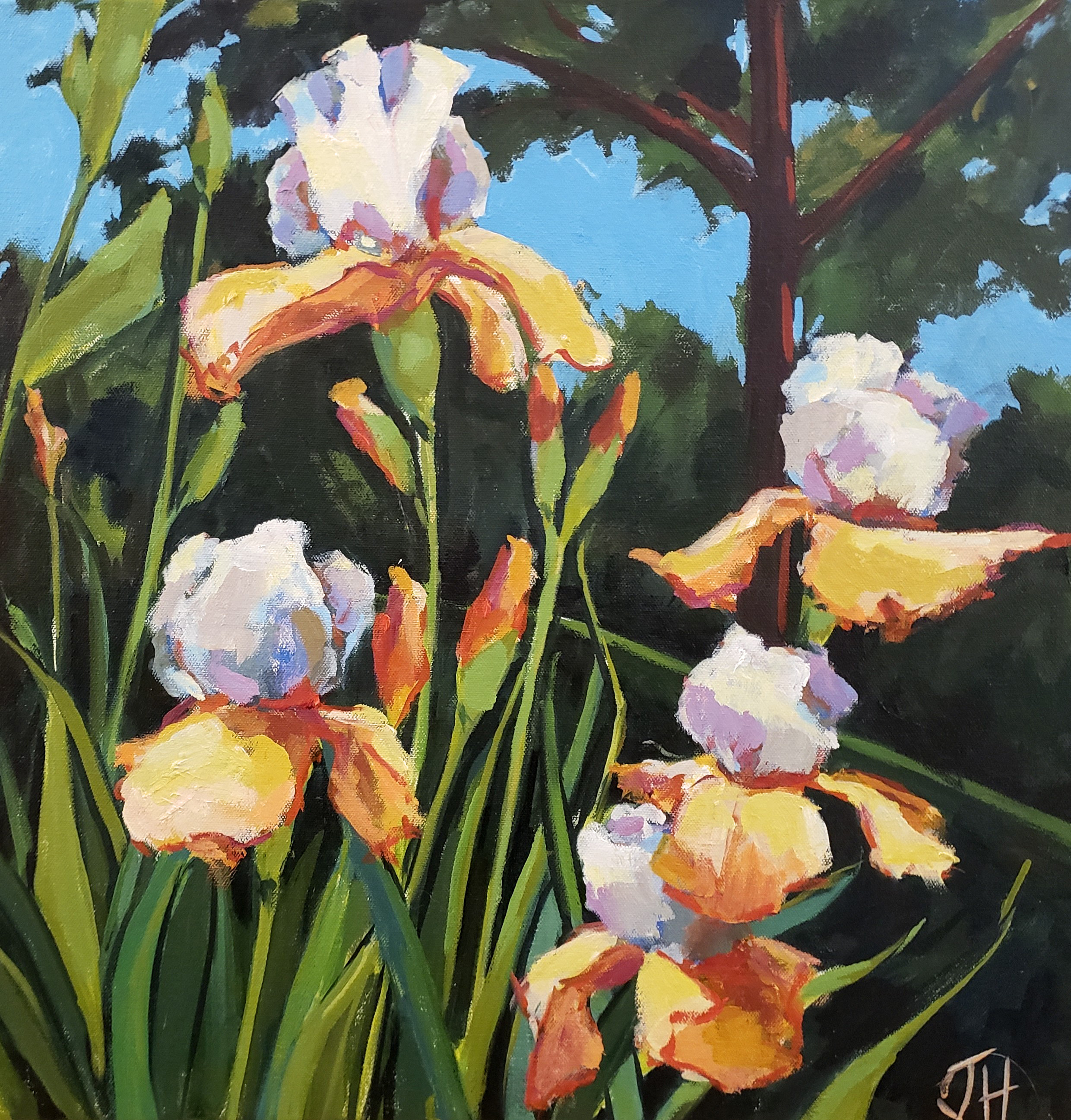 Jenn hallgren iris garden xii ezx5sd