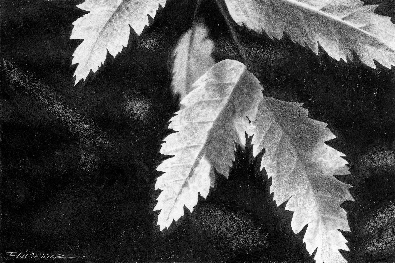 Autumn grace notes asf ichnp8