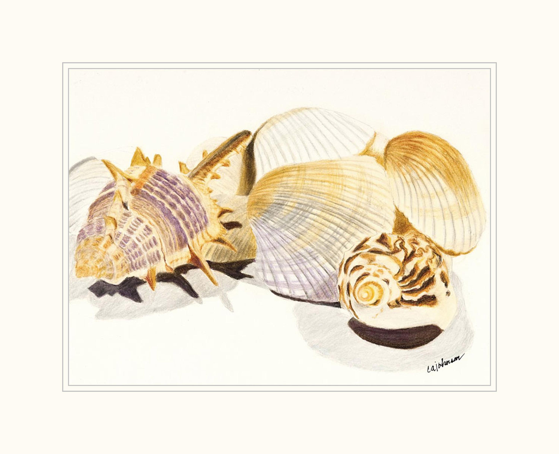 Shells matted xfalen