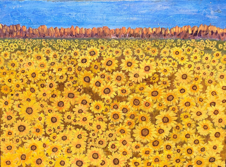 Field of sunflowers tffcju