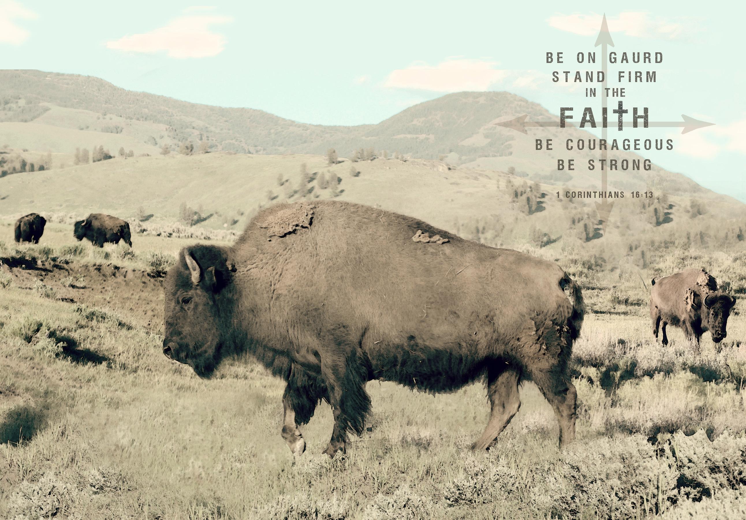 Buffalo verse ss v sml ww0ifr
